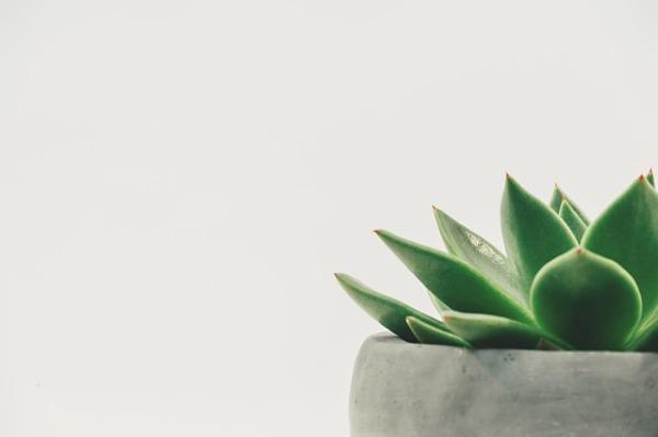 plant-2004483_640