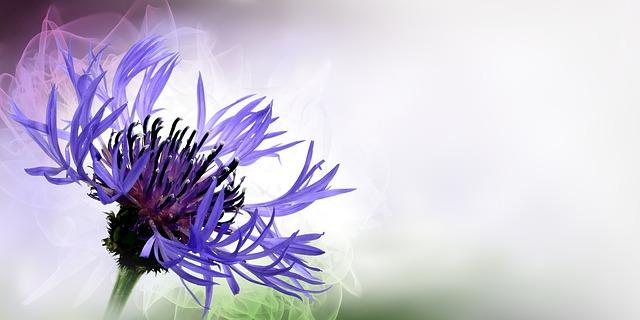 flower-1382493_640
